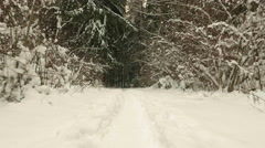 Trail into the winter forest. Clean and frosty daytime. Stock Footage
