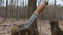 Hunting knife damask steel in an autumn forest. Stock Footage