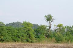 Tree Line next to Plow Land Stock Photos