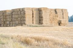 Straw Bales on the Field - stock photo