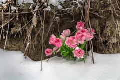Fresh flowers in the snow on a grunge background Stock Photos