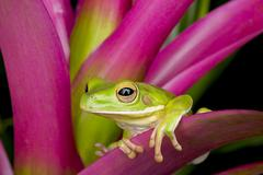 Tree Frog on Bright Foliage Stock Photos