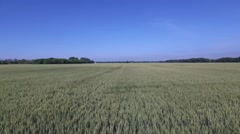 Aerial Flight Over Wheat Field Stock Footage