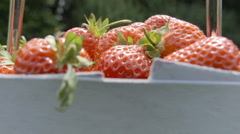 A fresh basket of ripe red strawberries Stock Footage