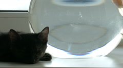 Home cat and a gold fish Stock Footage