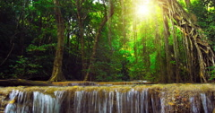 Beautiful nature background of exotic plants in tropical rainforest in Thailand  Stock Footage