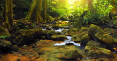 Wilderness of deep forest with creek and sunlight shine through leaves and trees Stock Footage