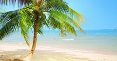 Idyllic tropical background of palm tree on scenic white sand beach of sea coast - stock footage