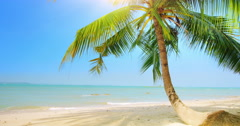 Palm tree on tropical coast with blue sky and calm sea tourism 4K background  Stock Footage