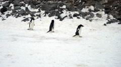 Adelie Penguins in snow, Paulet Island, Antarctica - stock footage