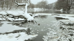Duck floating in the winter river. Used professional gimbal stabilazer. Stock Footage
