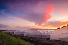 green house in farm at beautiful sunset - stock photo