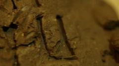 1  sumerian clay tablet writing Mesopotamian Stock Footage