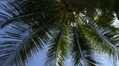 Coconut Palm Tree in Blue Tropical Sky Stock Footage