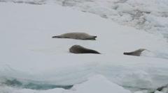 Seals in Antarctica - stock footage