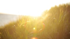 Green grass on hill shakes from wind. Beautiful sunset on background. Sun beam - stock footage