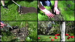 Stock Video Footage of Fighting mole rodent with trap in garden. Clips collage.