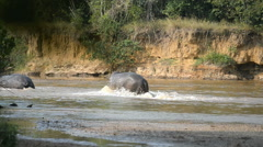 Hippos, Ishasha river, Queen Elizabeth National Park, Uganda, Africa - stock footage