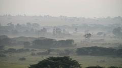 Savanna in a morning fog, Queen Elizabeth National Park, Uganda, Africa. Stock Footage