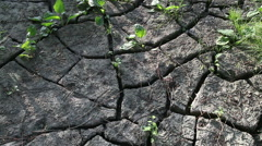 The Ground Cracked by Drought Stock Footage