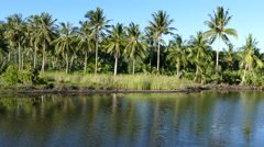 Palmtrees next to a pond in Anda Stock Footage