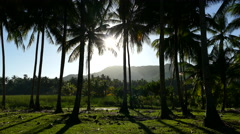 Sunlight through the Palmtrees at the countryside in Anda Stock Footage