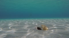 Seashell Laying On Sandy Seabed Stock Footage