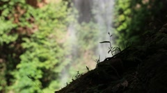Close up of silhouetted, small plants Stock Footage