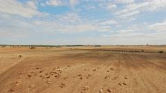 Cows Sandhill Cranes Herd Drone Footage Flock Landscape Nature Idyllic Sky Stock Footage