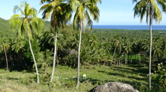 Palmtrees, farmland and the ocean seen from the hills of Anda Stock Footage