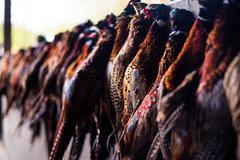 Cock pheasants and hen birds hanging after a shoot, Wiltshire, England, United - stock photo