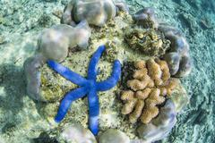 Underwater view of the reef on Pulau Lintang Island, Anambas Archipelago, - stock photo