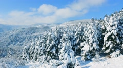Drone Footage Snow Covered Trees Winter Nature Beautiful Europe Aerial Forest Stock Footage