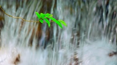 Little Tree Branch Suspended over Waterfall, with Sound. UltraHD video Stock Footage