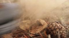 Treading a Mushroom Common Puffball Stock Footage
