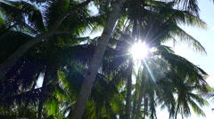 Sunlight coming through the palmtree Stock Footage