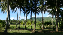 Palmtree and mountain landscape in the morning Stock Footage