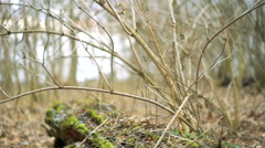Old tree trimmed with moss Stock Footage