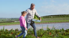 Farmer With Daughter Harvesting Organic Carrot Crop On Farm Stock Footage