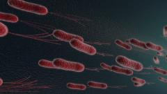 Under the microscope, escherichia bacteria Stock Footage