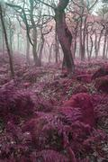 Beautiful surreal alternate colored forest landscape Stock Photos