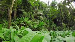 Dense Tropical Vegetation on a Rainforest Hillside. UltraHD video - stock footage