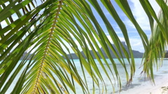 Palm tree leaf swaying in the wind on Bora Bora beach - stock footage