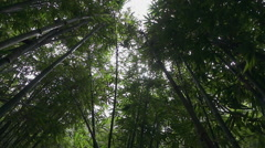 SLOW MOTION: Lush bamboo forest Stock Footage