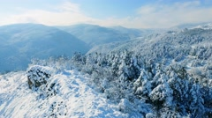 Idyllic Landscape Snow Covered Trees Drone Footage Winter Nature Beautiful Stock Footage