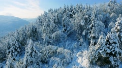 Drone Footage Snow Covered Trees Nature Beautiful Winter Europe Aerial Forest Stock Footage