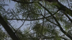 Blue Sky Through Palo Verde Tree Branches Stock Footage