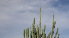 Clouds passing behind a cactus Timelapse Stock Footage