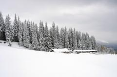 Winter calm mountain landscape with rime and snow covered spruce trees (view  Stock Photos
