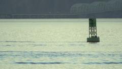 Sea Lion on a buoy 1 Stock Footage